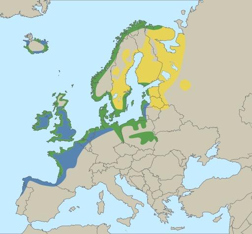 Le goéland argenté en Europe