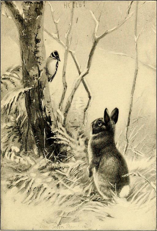 Le lapin et le pic-vert