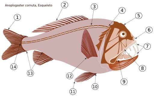 Le poisson-ogre