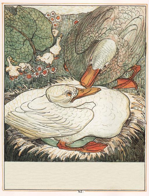 Le vilain petit canard - 7