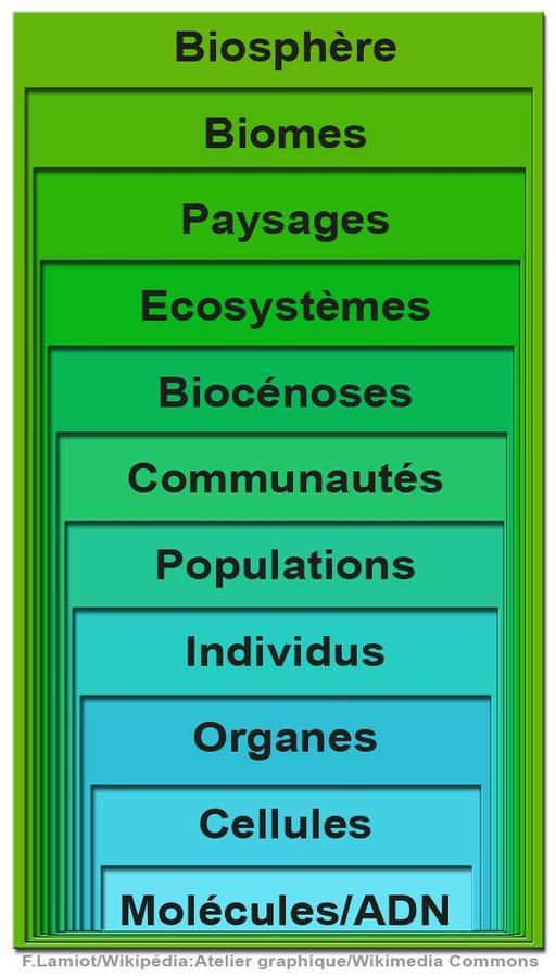 Le vivant et la biodiversité