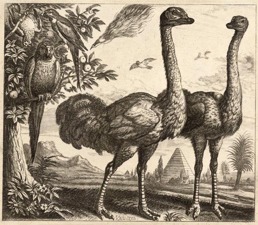 Les deux autruches et les oiseaux
