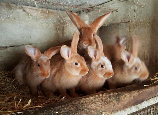 Les lapins de Paul - 01