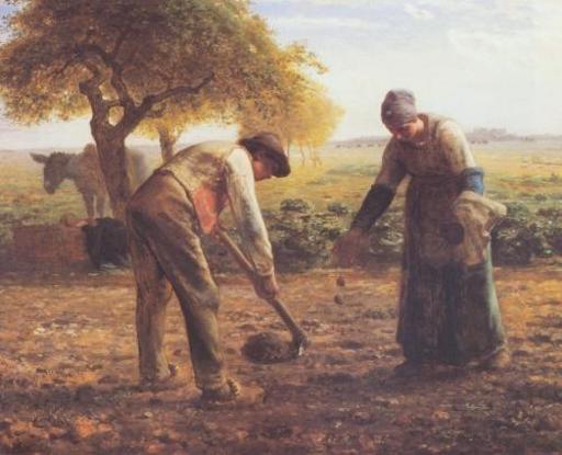 Les planteurs de pommes de terre