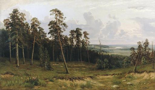 Lisière de forêt de pins
