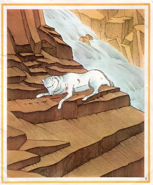Loup-Blanc 5