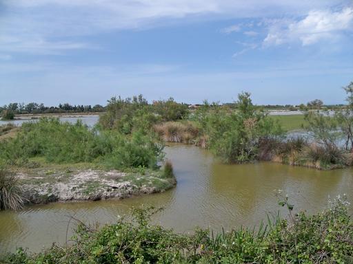 Marais près de Vaccarès