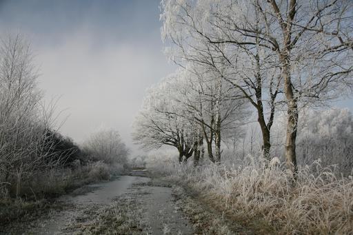 Matin d'hiver en Allemagne