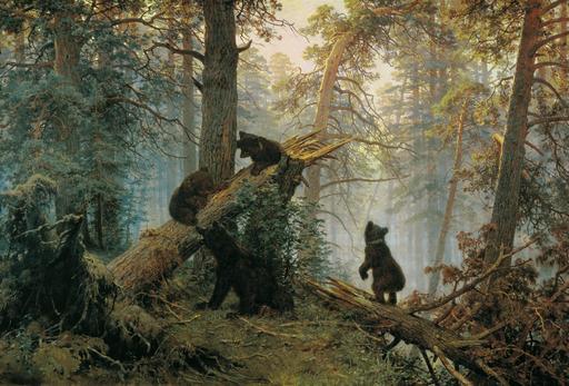 Matin dans une forêt de pins