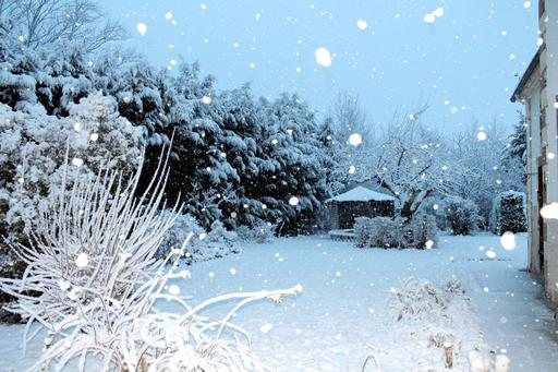 Matin de neige dans le jardin