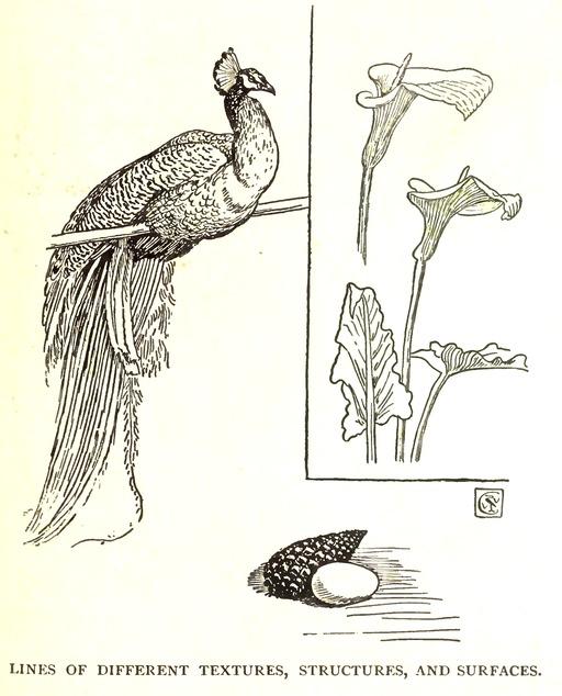 Modèle animal et végétal