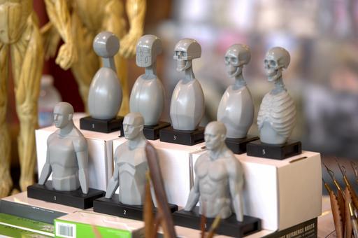 Modèles pour dessin anatomique