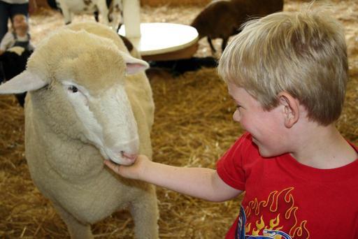 Mouton et garçon