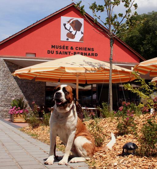 Musée du chien Saint-Bernard