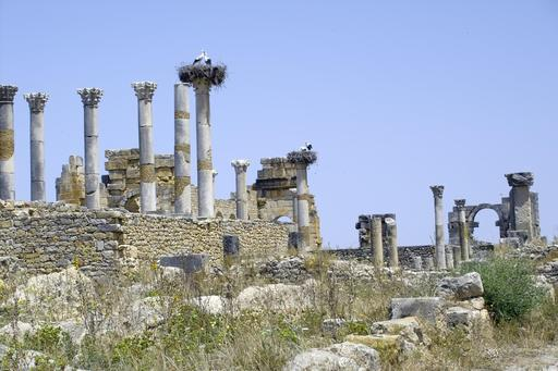 Nids de cigognes dans les ruines de Volubilis