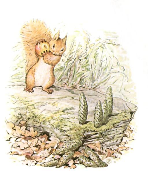 Noisette l'écureuil - 19