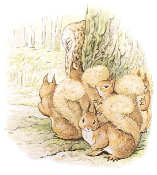 Noisette l'écureuil - 24