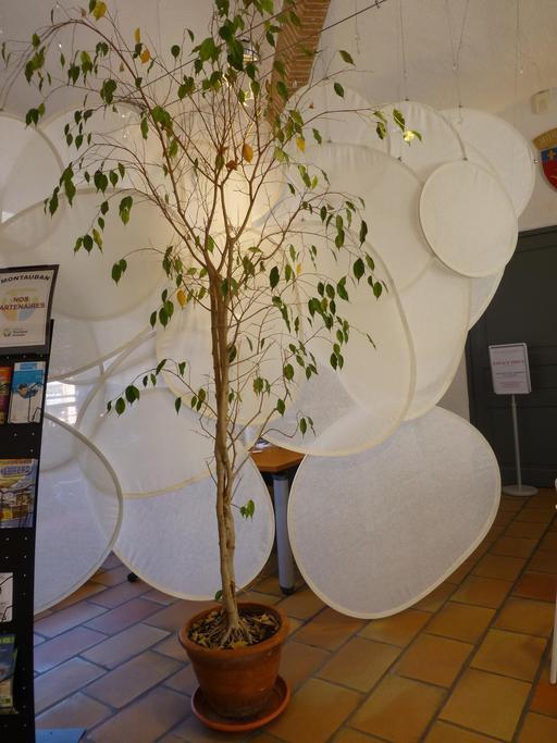 Office du tourisme de Montauban