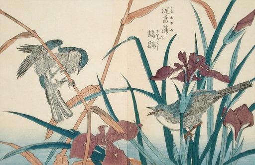 Oiseaux et iris en fleurs