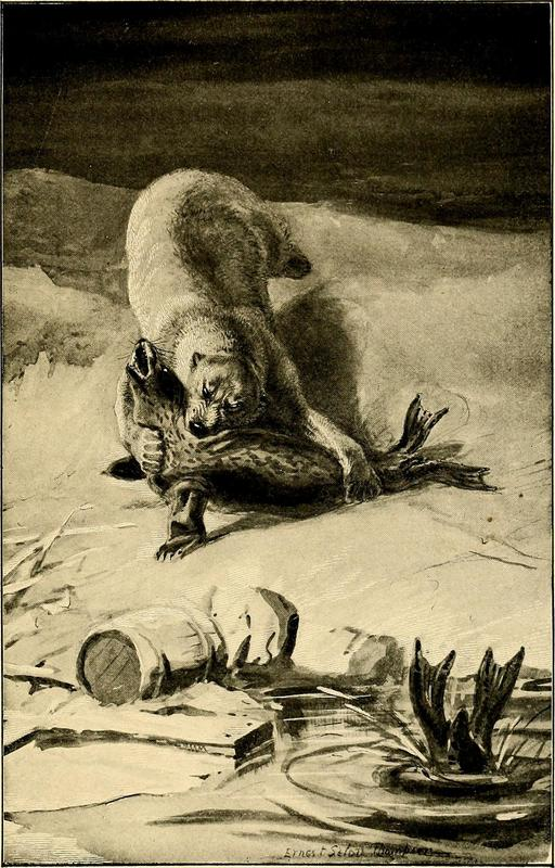 Ours polaire et phoque