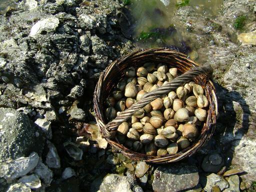 Panier de coques