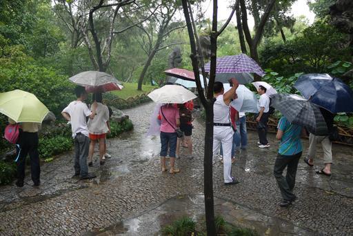 Parapluies dans un jardin