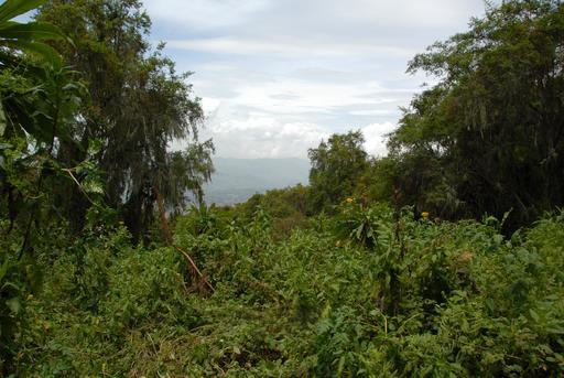 Parc National Des Volcans au Rwanda