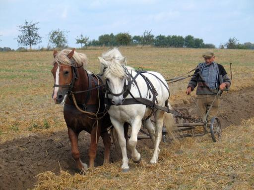 Paysan labourant avec une charrue tractée par deux chevaux