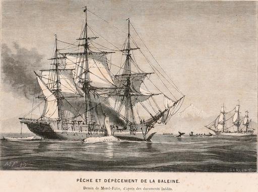 Pêche à la baleine en 1866