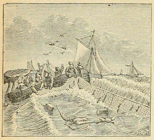 Pêche au hareng au XIXème siècle