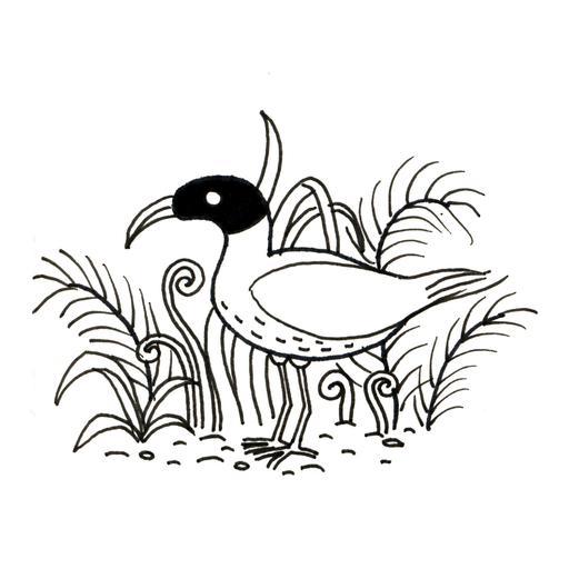 Petit ibis