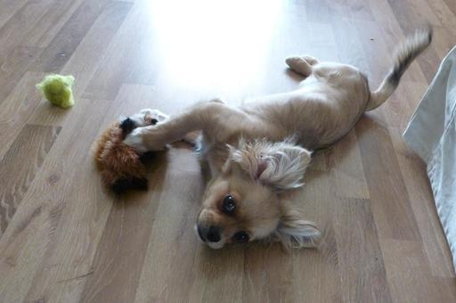 Petite chienne en train de jouer