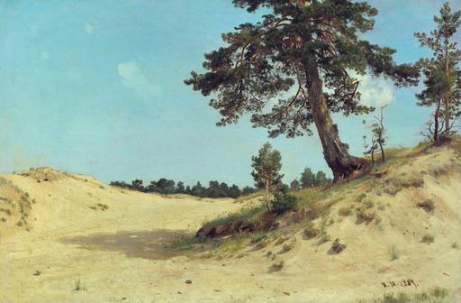 Pins dans les dunes