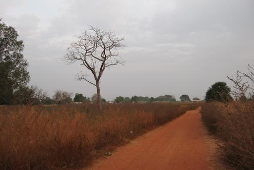 Piste en latérite en Casamance