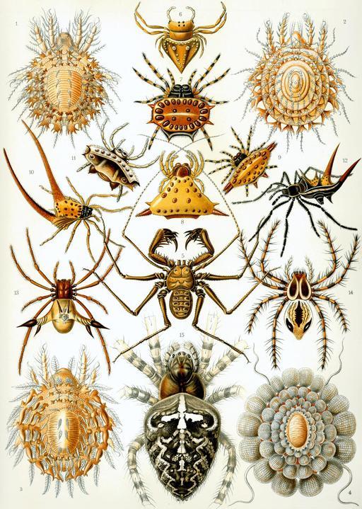 Planche d'arachnides en 1904