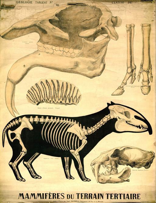 Planche Deyrolle de mammifères de l'ère tertiaire