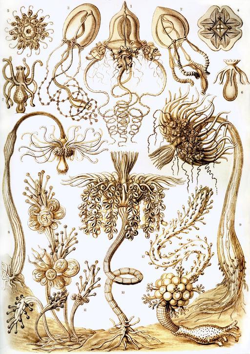 Planche N°6 de biologie marine