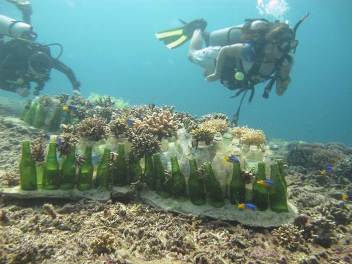 Plantation de corail