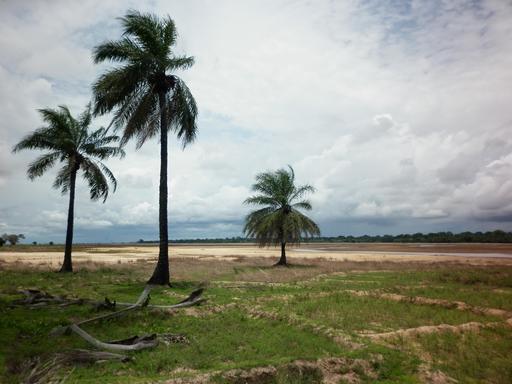 Plantations de riz au Sénégal