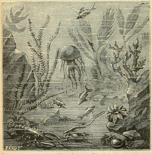 Plantes de la mer