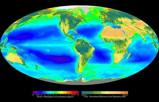 Producteurs primaires terrestres et océaniques