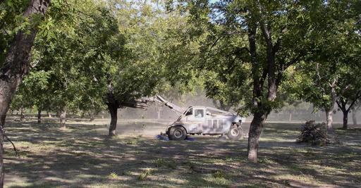 Récolte mécanique de noix de pécan au Texas
