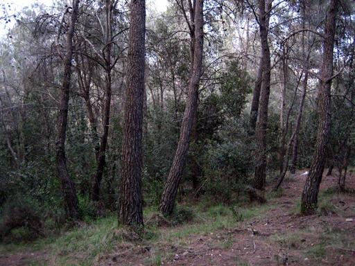 Régénération forestière méditerranéenne