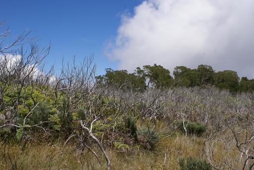 Régénération forestière naturelle après un incendie