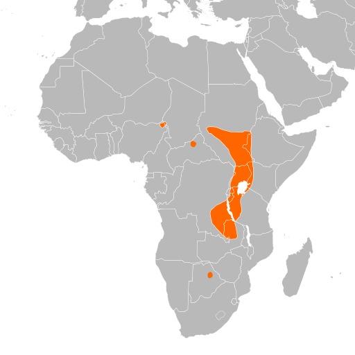 Répartition du bec-en-sabot du Nil en Afrique