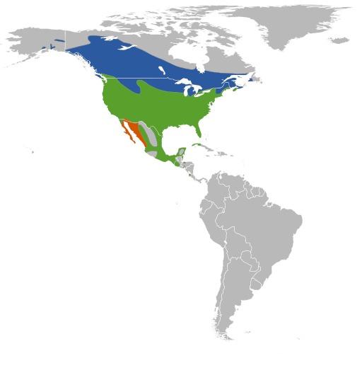 Répartition du carouge à épaulettes rouges en Amérique du nord
