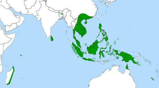Répartition géographique des Népenthes