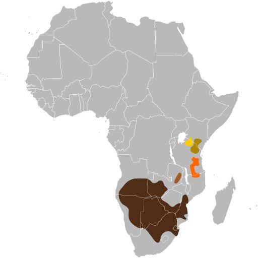 Répartition géographique du gnou bleu en Afrique du Sud