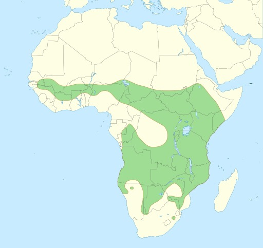 Répartition géographique du lion en Afrique
