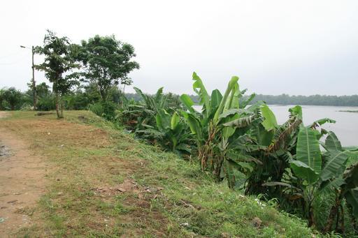 Rive du Wouri à Douala
